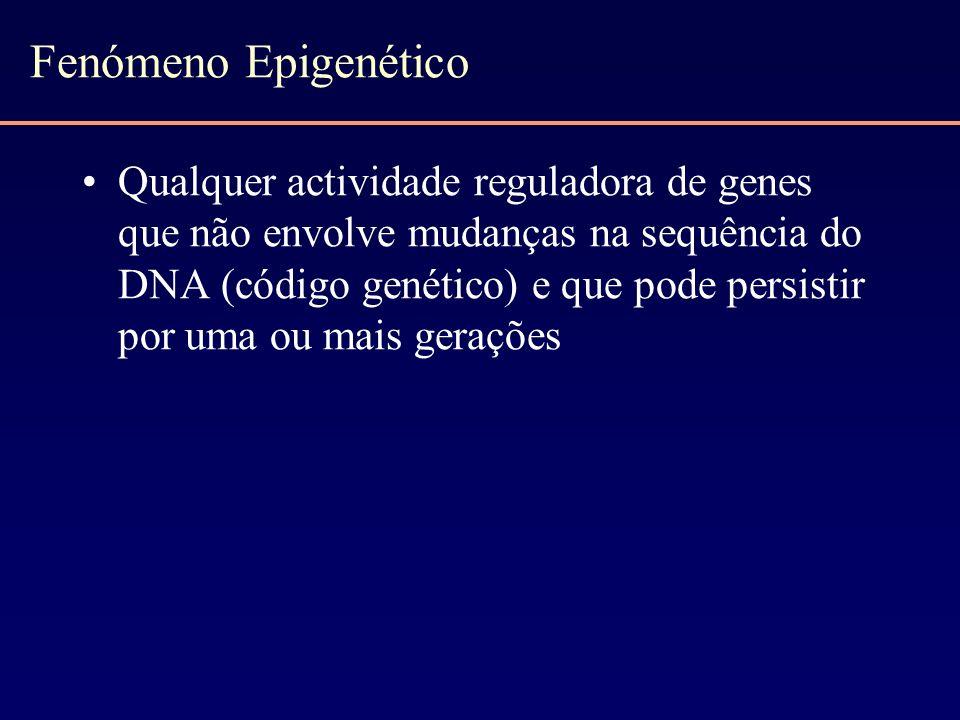 Fenómeno Epigenético Qualquer actividade reguladora de genes que não envolve mudanças na sequência do DNA (código genético) e que pode persistir por u