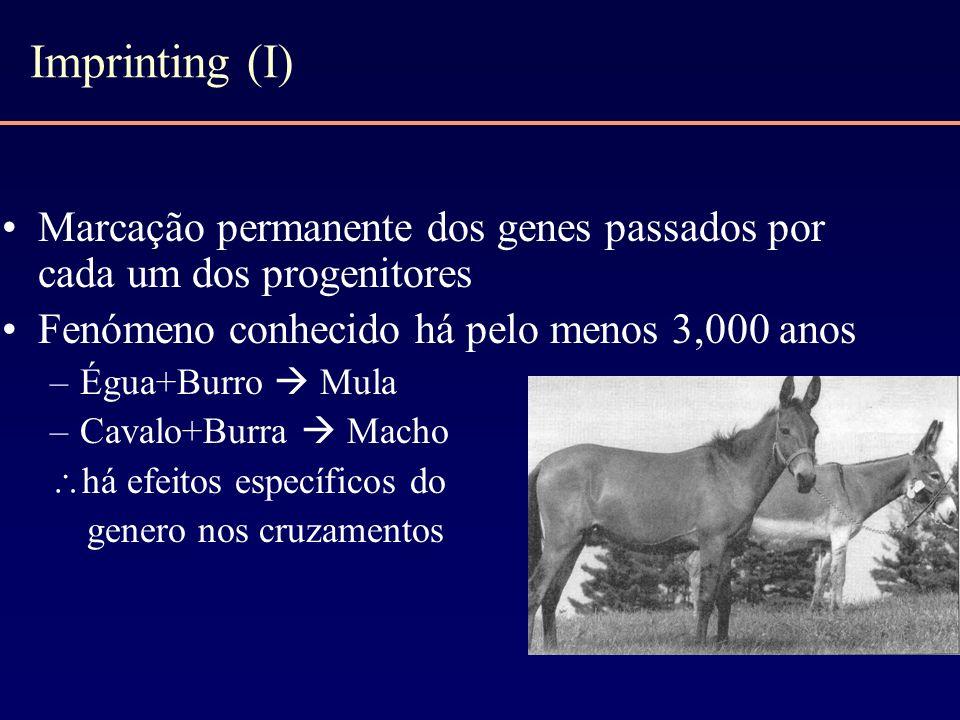 Imprinting (I) Marcação permanente dos genes passados por cada um dos progenitores Fenómeno conhecido há pelo menos 3,000 anos –Égua+Burro Mula –Caval