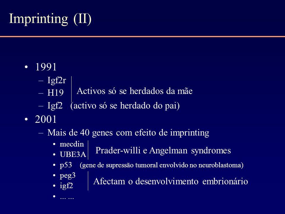 Imprinting (II) 1991 –Igf2r –H19 –Igf2 (activo só se herdado do pai) 2001 –Mais de 40 genes com efeito de imprinting mecdin UBE3A p53 (gene de supress