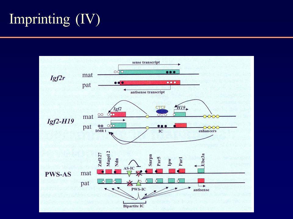 Imprinting (IV)