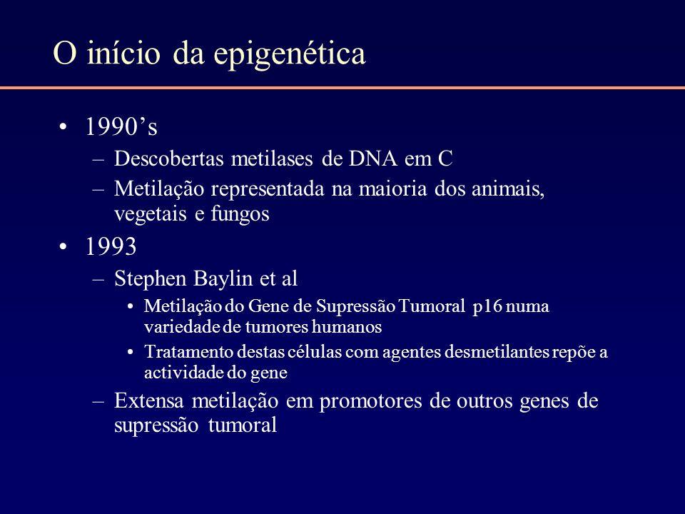 O início da epigenética 1990s –Descobertas metilases de DNA em C –Metilação representada na maioria dos animais, vegetais e fungos 1993 –Stephen Bayli