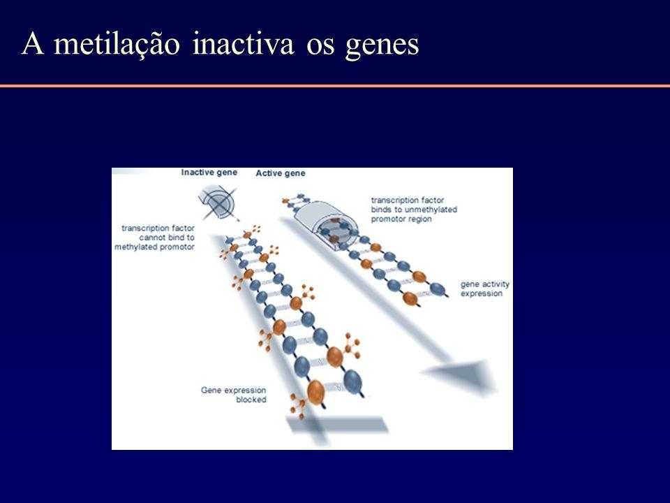 A metilação inactiva os genes