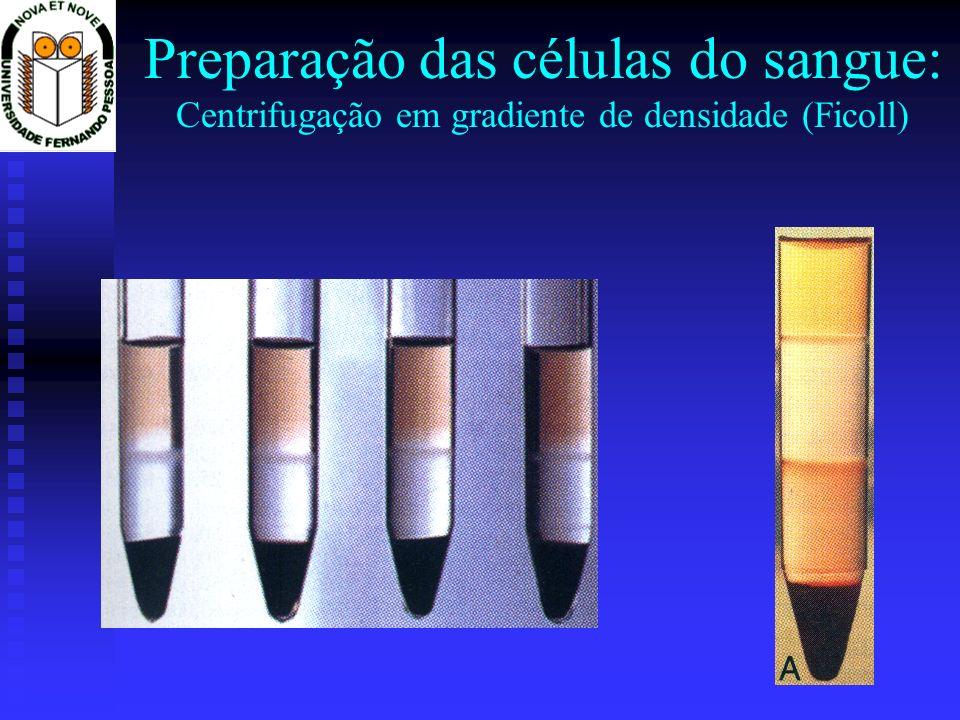 Preparação das células do sangue: Centrifugação em gradiente de densidade (Ficoll)