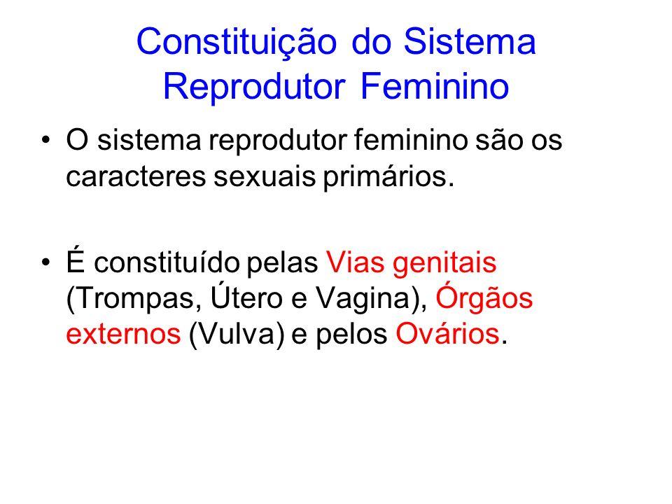 Constituição do Sistema Reprodutor Feminino O sistema reprodutor feminino são os caracteres sexuais primários. É constituído pelas Vias genitais (Trom