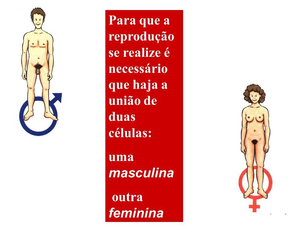 Para que a reprodução se realize é necessário que haja a união de duas células: uma masculina outra feminina