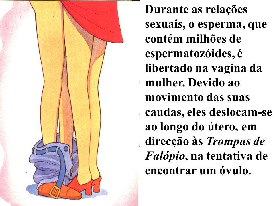 Durante as relações sexuais, o esperma, que contém milhões de espermatozóides, é libertado na vagina da mulher. Devido ao movimento das suas caudas, e