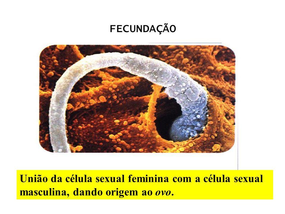 União da célula sexual feminina com a célula sexual masculina, dando origem ao ovo. FECUNDAÇÃO