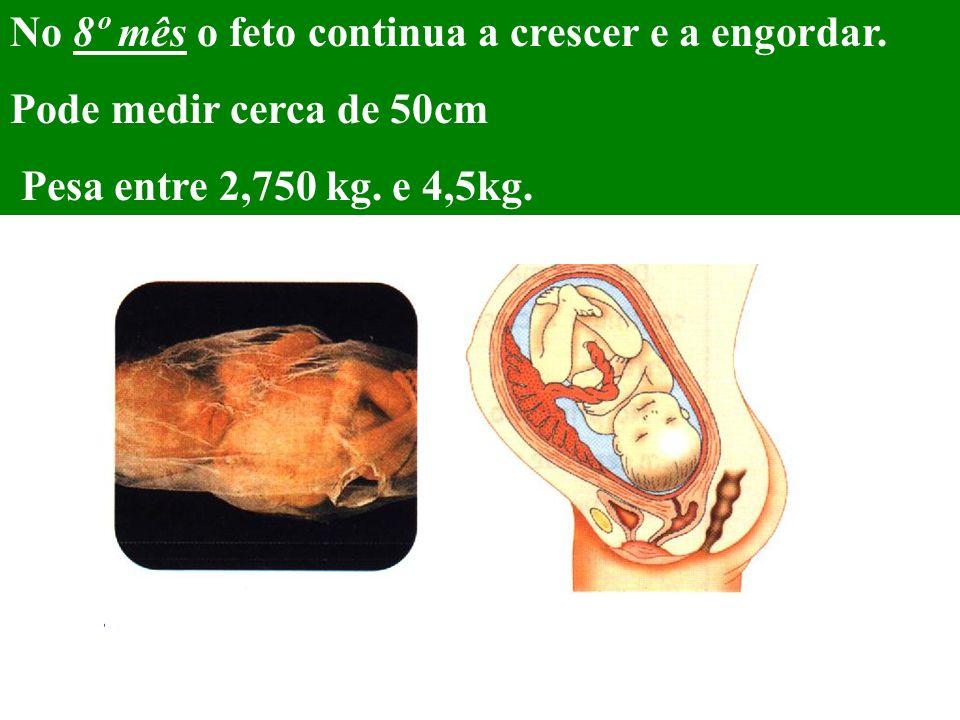 No 8º mês o feto continua a crescer e a engordar. Pode medir cerca de 50cm Pesa entre 2,750 kg. e 4,5kg.