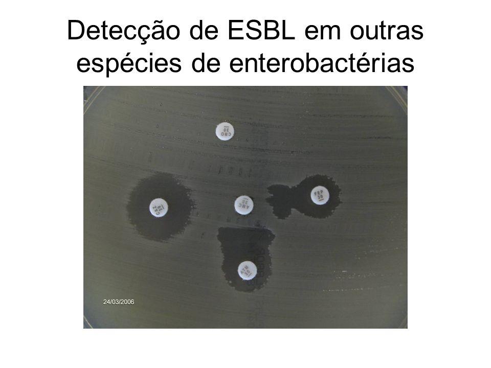 Detecção de ESBL em outras espécies de enterobactérias