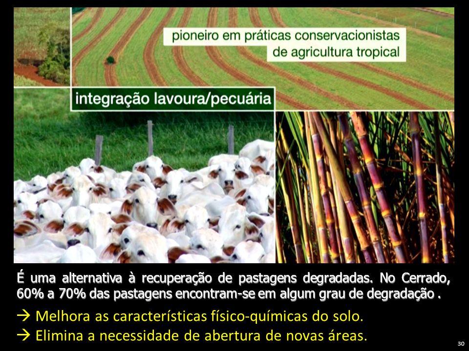 É uma alternativa à recuperação de pastagens degradadas. No Cerrado, 60% a 70% das pastagens encontram-se em algum grau de degradação. Melhora as cara