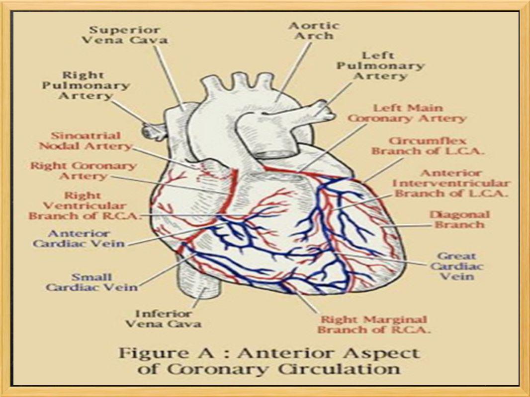 Antecedentes relevantes 1.Diabetes 2.Hipertensão arterial ( HTA ) 3.Dislipidemia 4.Obesidade 5.Tabagismo 6.Doenças: o vascular o artério-periférica o pulmonar o osteo-articular