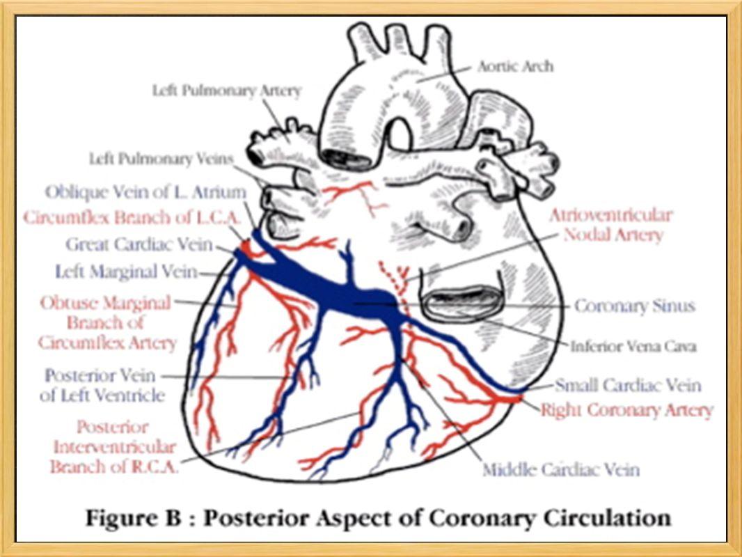 Causas da dor torácica Geralmente a dor torácica deve-se a uma redução no aporte de sangue às células do coração e consequente défice de oxigenação das mesmas.