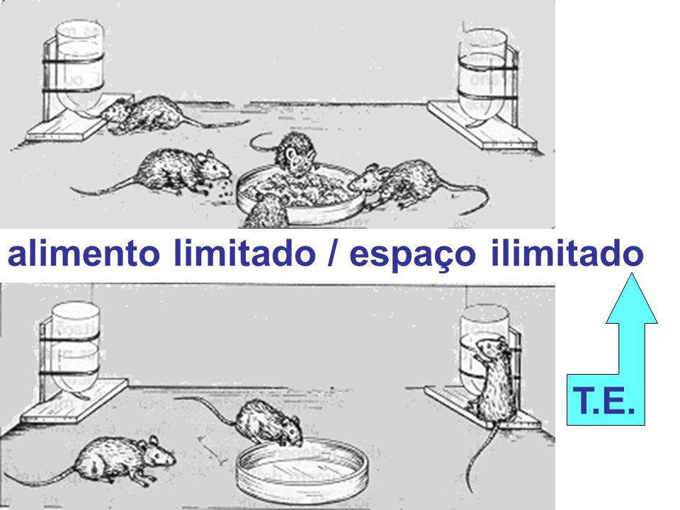 alimento limitado / espaço ilimitado T.E.