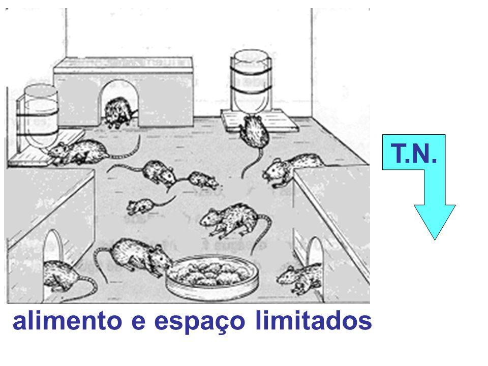 alimento e espaço limitados T.N.