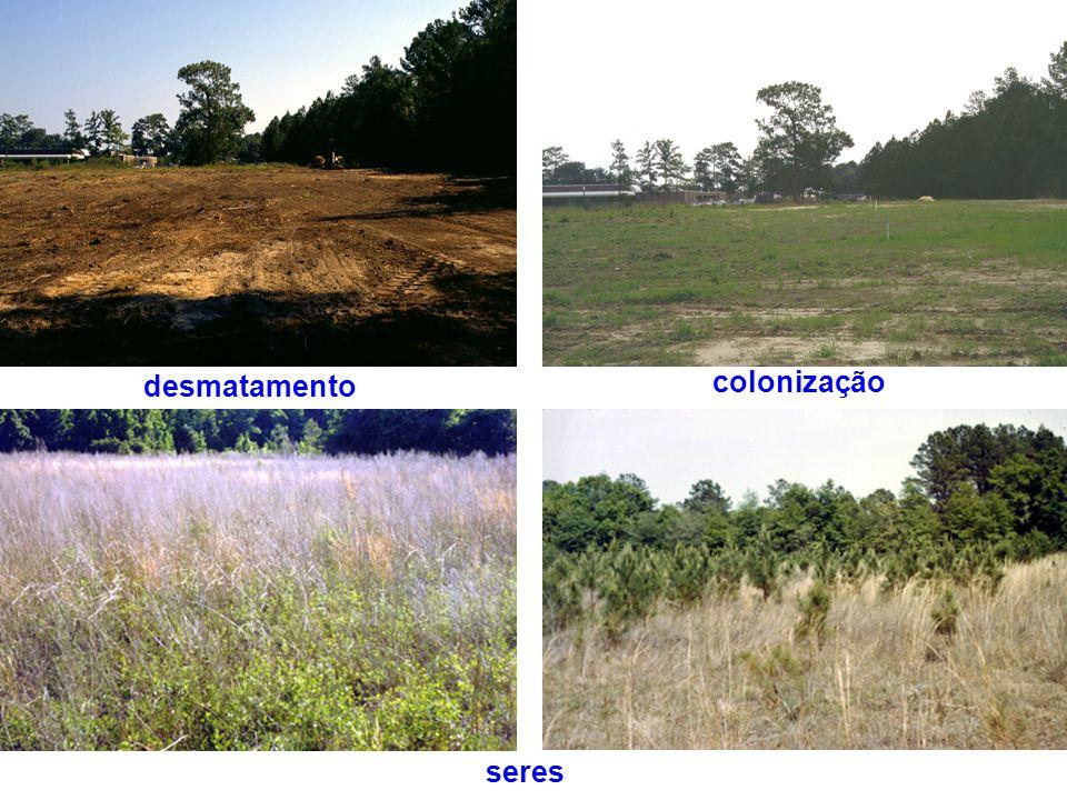 colonização seres desmatamento