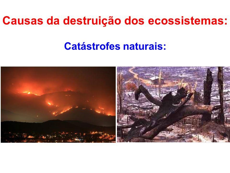 Causas da destruição dos ecossistemas: Catástrofes naturais: