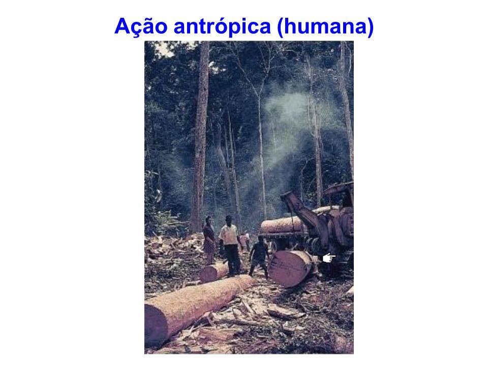 Ação antrópica (humana)