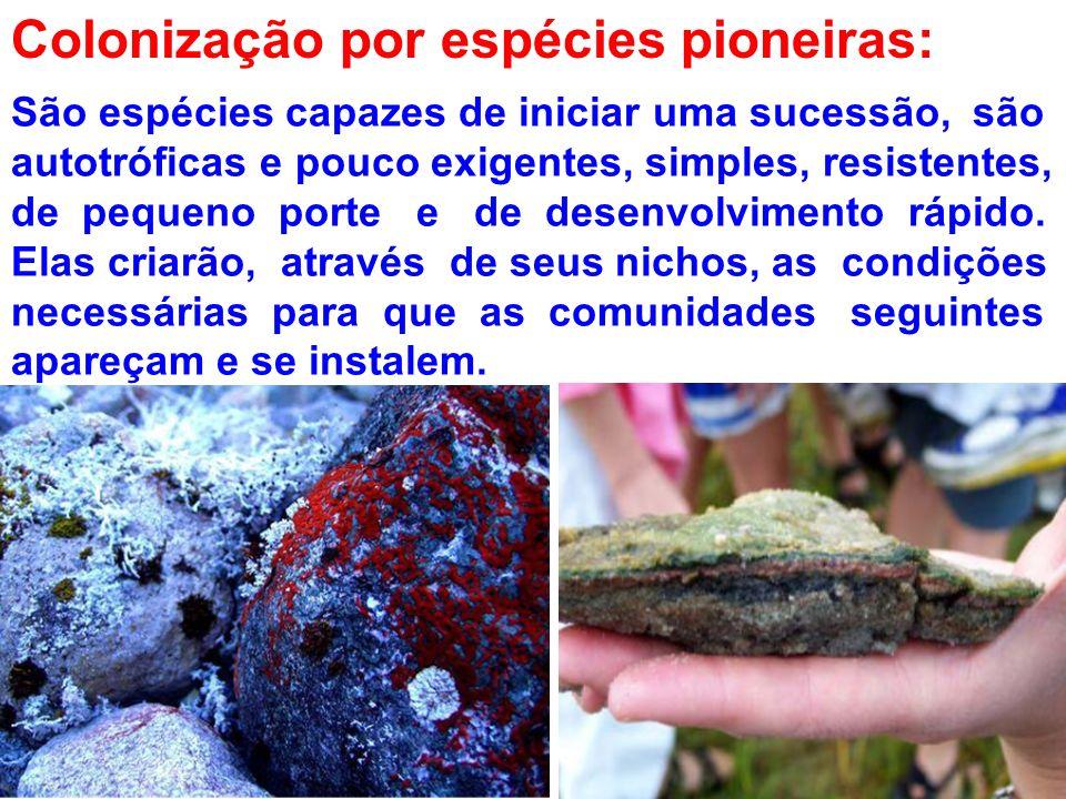 Colonização por espécies pioneiras: São espécies capazes de iniciar uma sucessão, são autotróficas e pouco exigentes, simples, resistentes, de pequeno