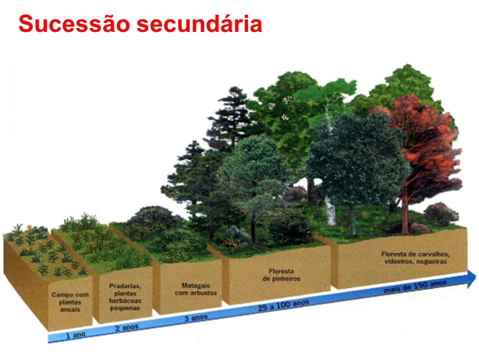 Processo em que ocorrem mudanças graduais da estrutura e composição dos ecossistemas nos quais existiam vida anteriormente.