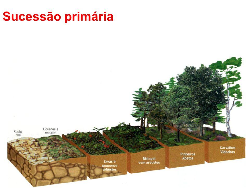 Processo em que ocorrem mudanças lentas e graduais na estrutura e composição dos ecossistemas nos quais não existiam vida anteriormente.
