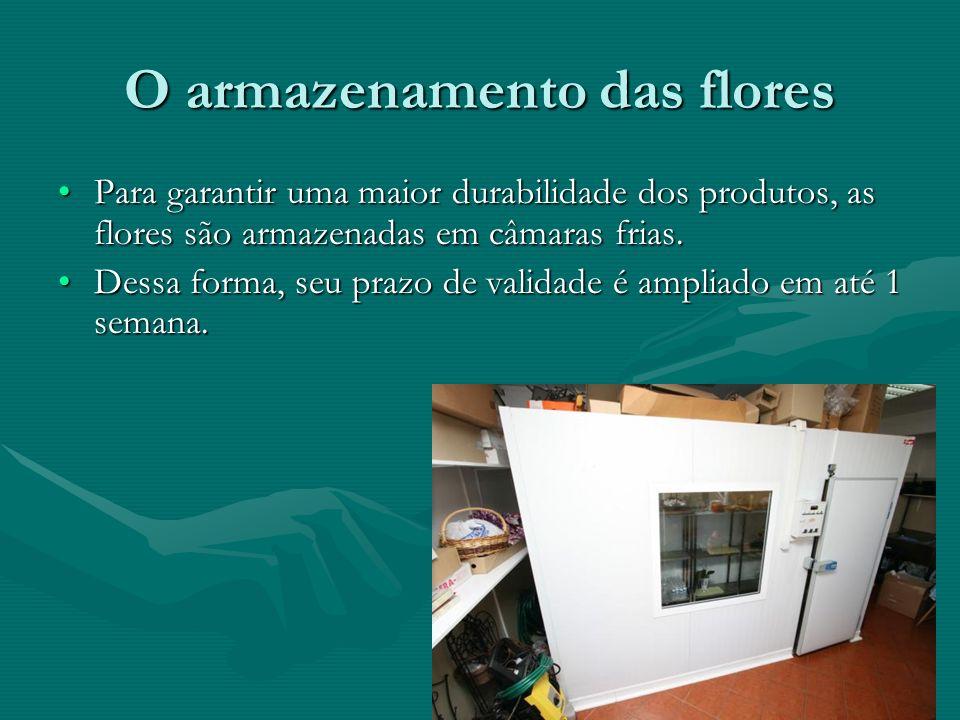 Conhecendo um pouco sobre os fornecedores... O estado do Ceará* A seguir, apresentaremos trecho de um vídeo da Embrapa sobre a produção de flores no e