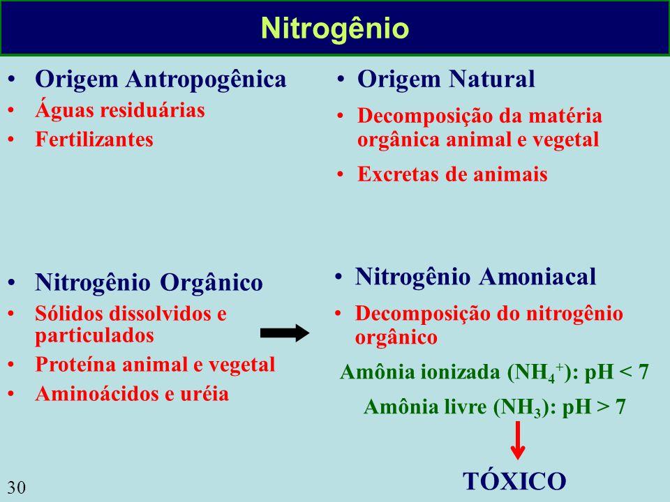 30 Nitrogênio Origem Natural Decomposição da matéria orgânica animal e vegetal Excretas de animais Origem Antropogênica Águas residuárias Fertilizante