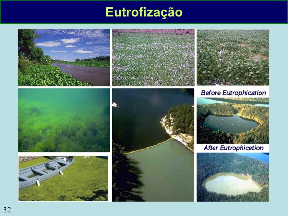 32 Eutrofização