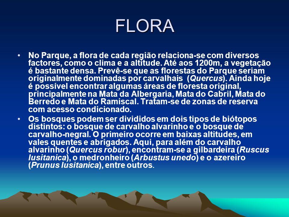 FLORA No Parque, a flora de cada região relaciona-se com diversos factores, como o clima e a altitude.