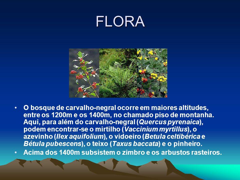 FLORA O bosque de carvalho-negral ocorre em maiores altitudes, entre os 1200m e os 1400m, no chamado piso de montanha.