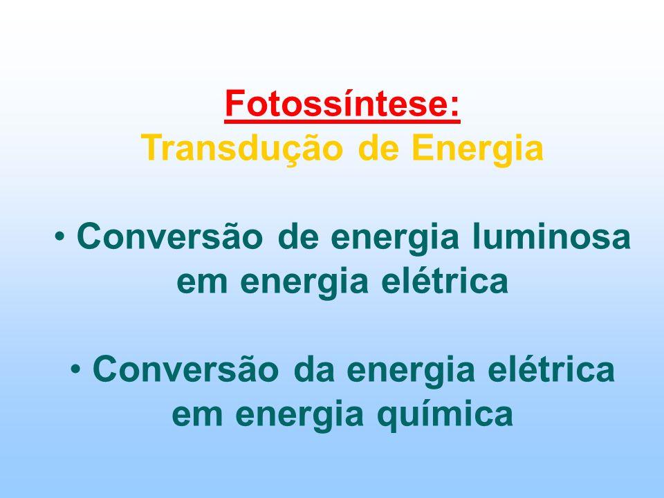 Fotossíntese: Transdução de Energia Conversão de energia luminosa em energia elétrica Conversão da energia elétrica em energia química
