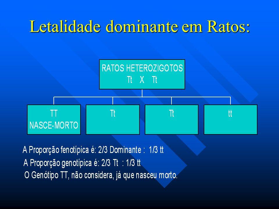 LETALIDADE A letalidade ocorre tanto em homozigotoze dominante ou homozigoze recessiva. Como exemplo, a pelagem em ratos: A letalidade ocorre tanto em