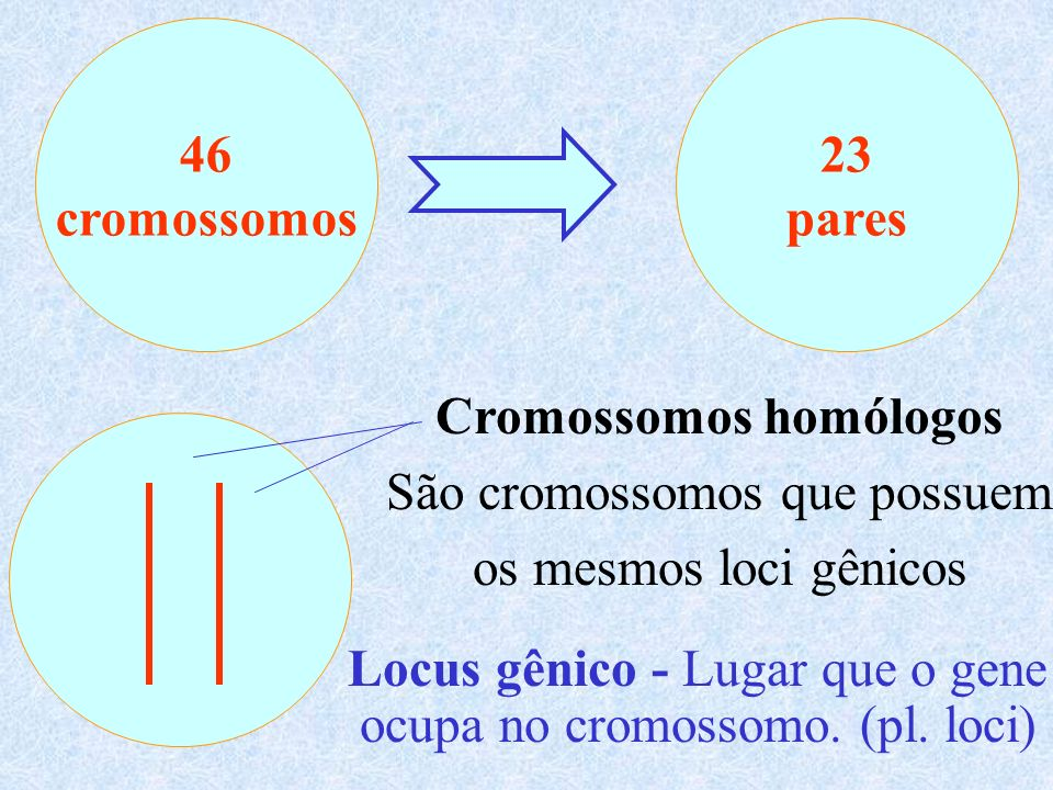 Cromossomos - seqüência linear de genes A a B B cc D d EE Genes que ocupam os mesmos loci gênicos em cromossomos homólogos são denominados genes alelos A é alelo de a mutação Gene AGene a Gene AGene a