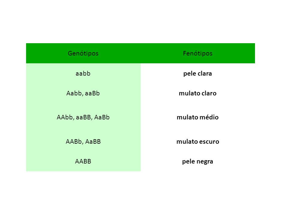 GenótiposFenótipos aabbpele clara Aabb, aaBbmulato claro AAbb, aaBB, AaBbmulato médio AABb, AaBBmulato escuro AABBpele negra