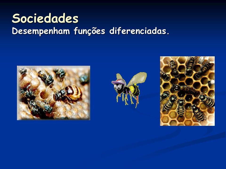 Amensalismo ou Antibiose Utilizam substâncias tóxicas que inibem O crescimento de outras espécies.
