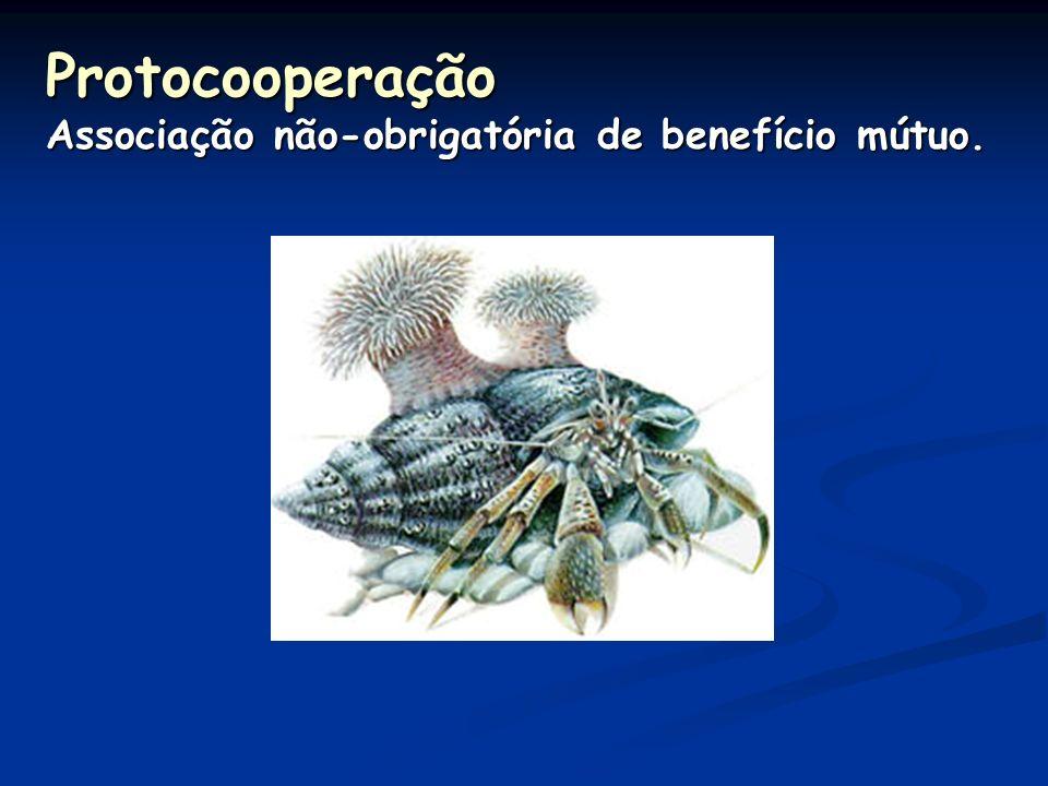 Interespecíficas harmônicas Mutualismo Associação obrigatória de benefício mútuo.