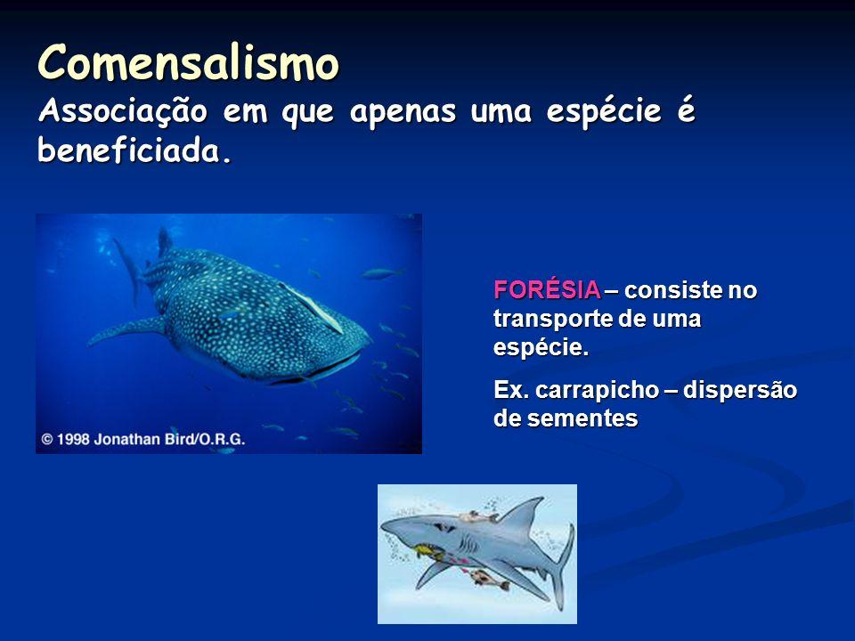 Comensalismo Associação em que apenas uma espécie é beneficiada.