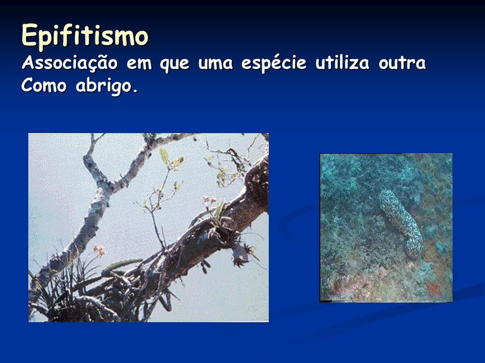 Comensalismo Associação em que apenas uma espécie é beneficiada. FORÉSIA – consiste no transporte de uma espécie. Ex. carrapicho – dispersão de sement