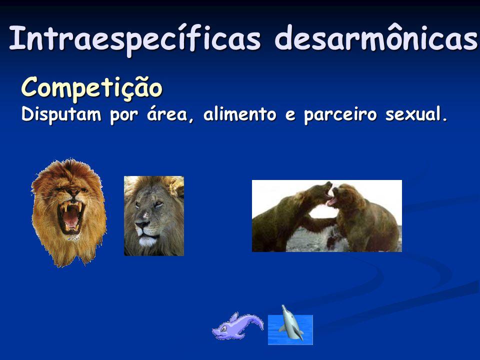 Epifitismo Associação em que uma espécie utiliza outra Como abrigo.