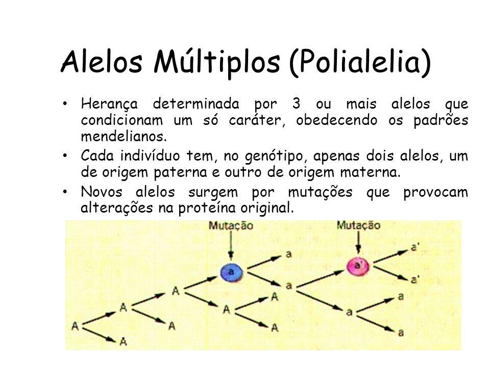 Alelos Múltiplos (Polialelia) Herança determinada por 3 ou mais alelos que condicionam um só caráter, obedecendo os padrões mendelianos.