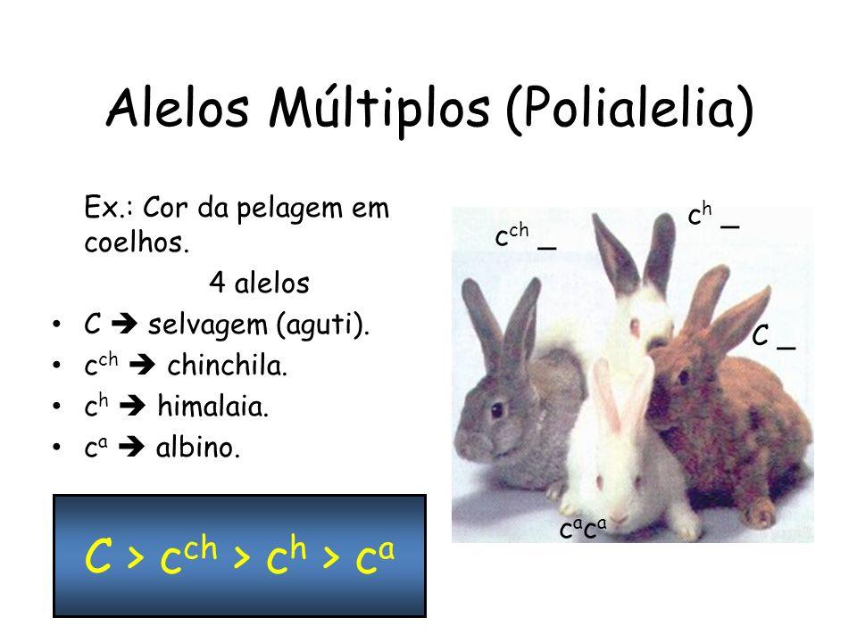 Alelos Múltiplos (Polialelia) Ex.: Cor da pelagem em coelhos.