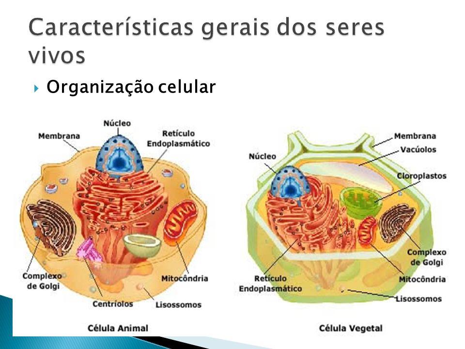 Metabolismo – conjunto de reações químicas que ocorre nas células dos seres vivos e permite a produção ou o consumo de substâncias com grande eficiência.