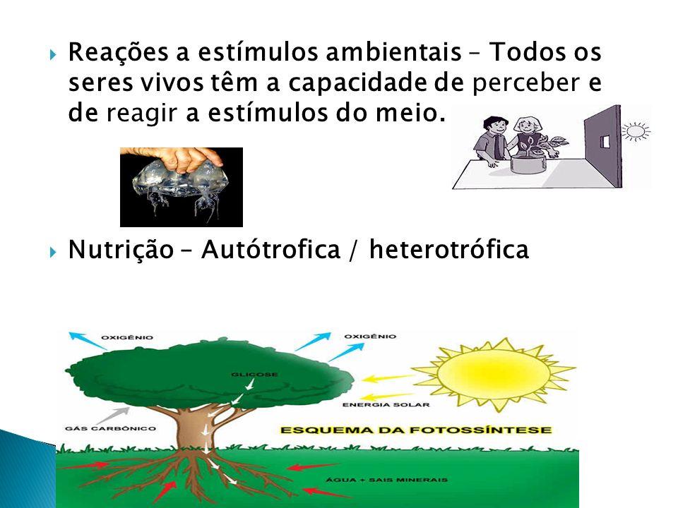 Reações a estímulos ambientais – Todos os seres vivos têm a capacidade de perceber e de reagir a estímulos do meio. Nutrição – Autótrofica / heterotró