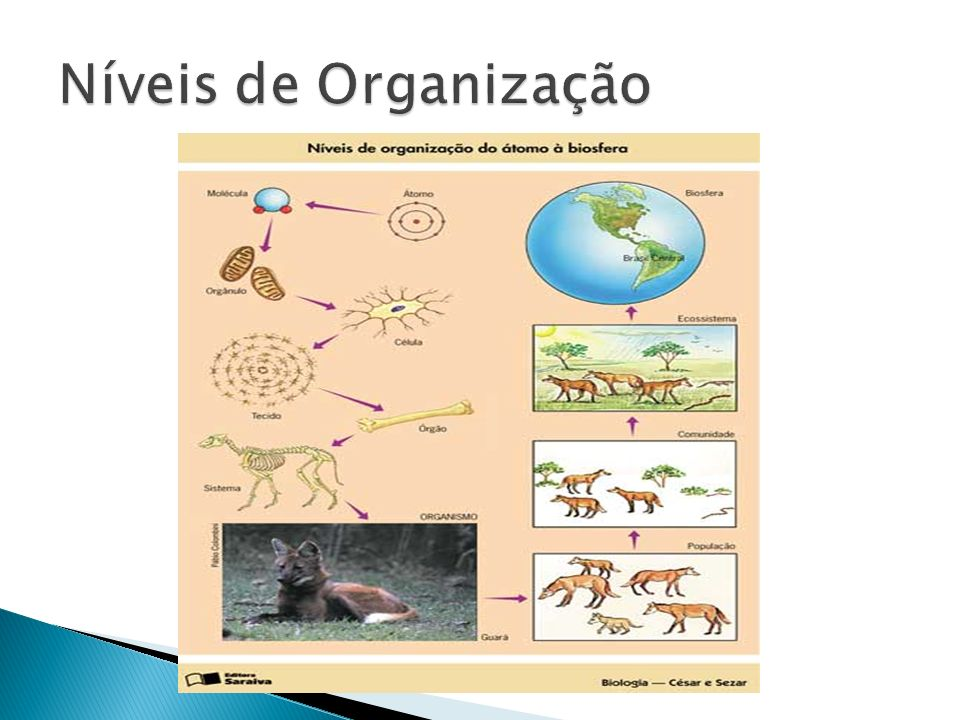 1) Um inseto é um ser vivo e uma pedra não.Que características os diferenciam.