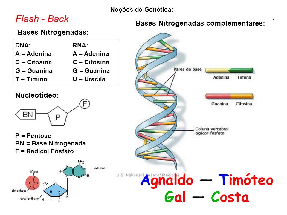 Noções de Genética: Bases Nitrogenadas: DNA:RNA: A – AdeninaA – Adenina C – CitosinaC – Citosina G – GuaninaG – Guanina T – TiminaU – Uracila P = Pentose BN = Base Nitrogenada F = Radical Fosfato Nucleotídeo: Bases Nitrogenadas complementares: Agnaldo Timóteo Gal Costa