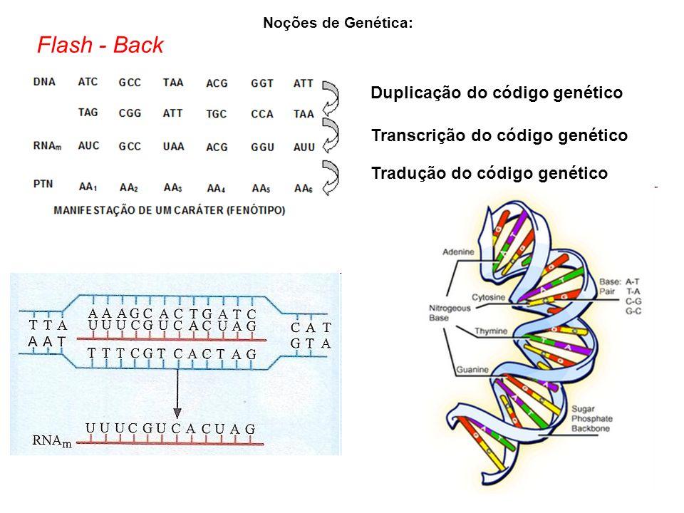 Flash - Back Noções de Genética: Duplicação do código genético Transcrição do código genético Tradução do código genético
