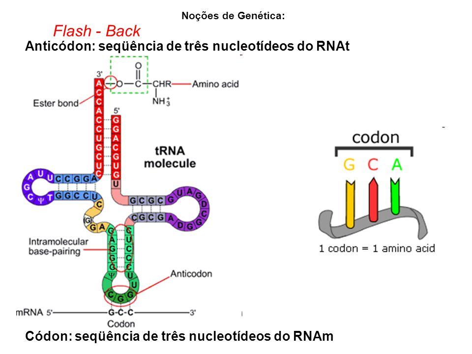 Noções de Genética: Flash - Back Códon: seqüência de três nucleotídeos do RNAm Anticódon: seqüência de três nucleotídeos do RNAt