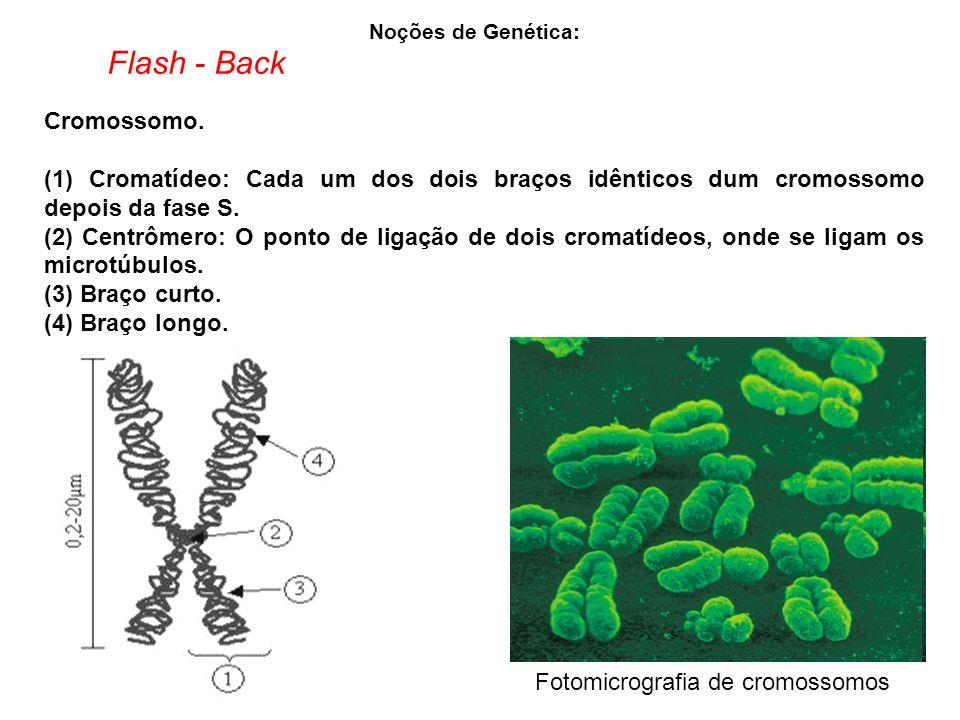 Noções de Genética: Cromossomo.