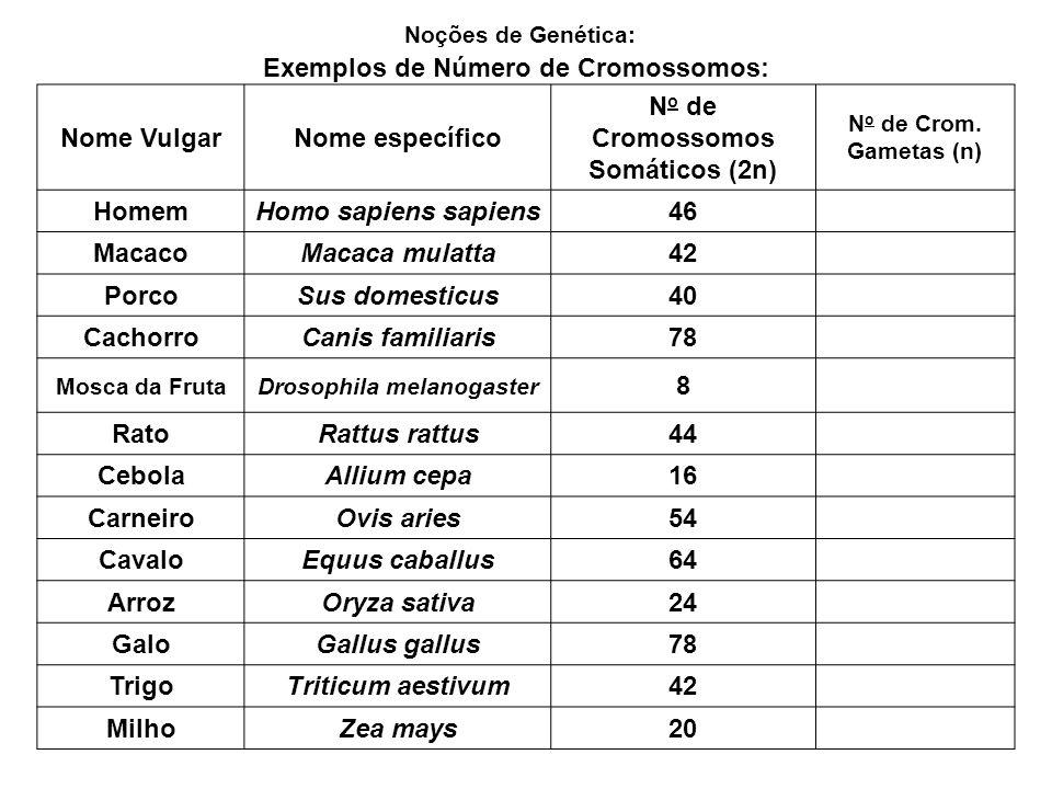 Exemplos de Número de Cromossomos: Nome VulgarNome específico N o de Cromossomos Somáticos (2n) N o de Crom. Gametas (n) HomemHomo sapiens sapiens46 M
