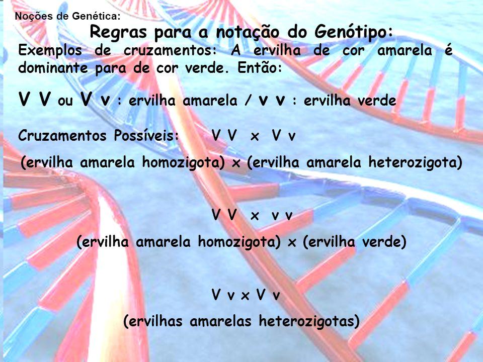 Noções de Genética: Regras para a notação do Genótipo: Exemplos de cruzamentos: A ervilha de cor amarela é dominante para de cor verde. Então: V V ou