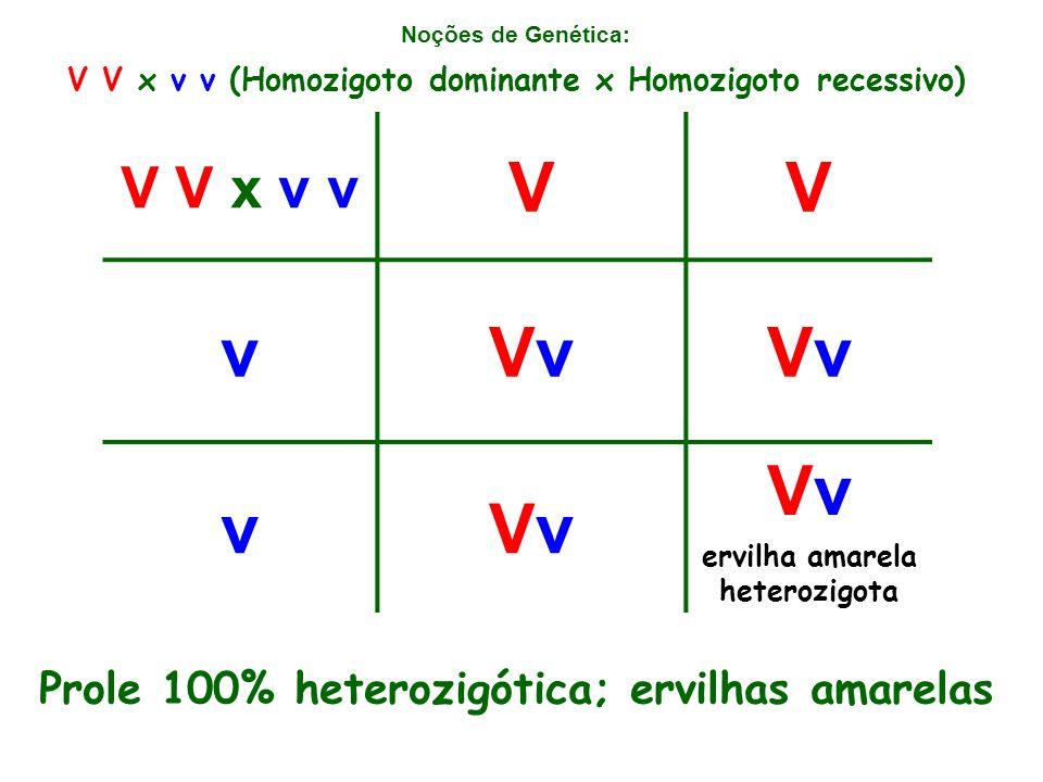 Noções de Genética: V V x v v VV vVvVvVvVv vVvVv Vv ervilha amarela heterozigota V V x v v (Homozigoto dominante x Homozigoto recessivo) Prole 100% heterozigótica; ervilhas amarelas